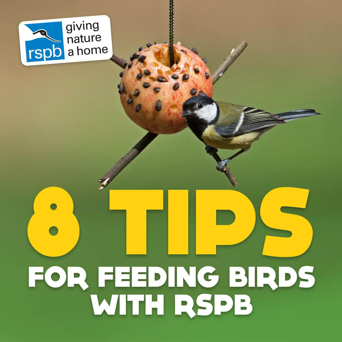 8 Tips for feeding birds with the RSPB